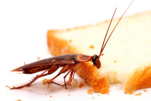 Cockroach Control in Ambur