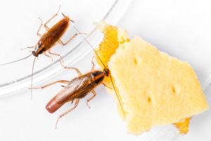 Cockroach Control in Vaniyambadi
