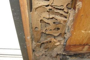 Anti termite treament in Gudiyatham