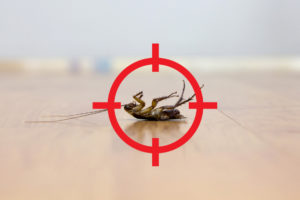 Pest control in Pernambut
