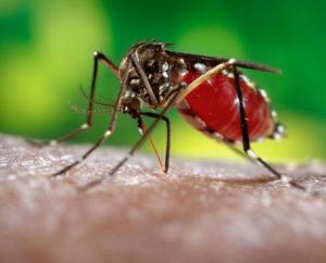 Mosquito control service in Vellore